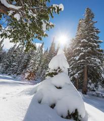 Frozen tree
