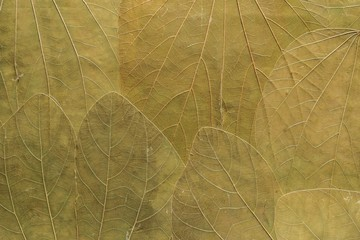 organic textured background from leaves