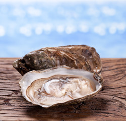 Raw oyster on wood. Sea at the background.
