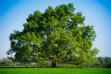 Summer Landscape-Beautiful lonely tree
