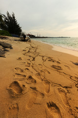 Footstep at the beach