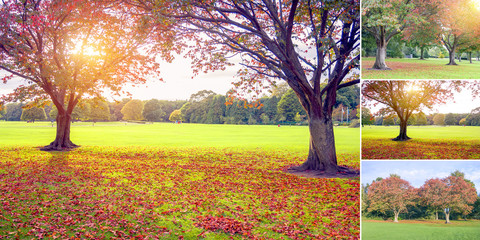 Sunset in autumn set