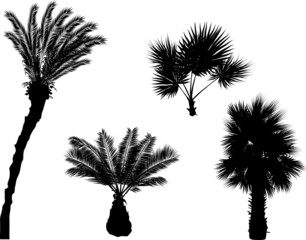 four palm silhouettes isolated on white