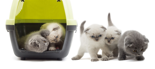 Kittens playing in a plastic box
