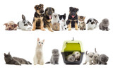 set of pets - 74894240
