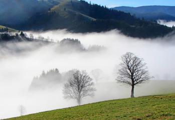 Bäume und Landschaft im Nebel