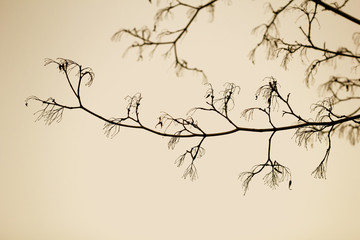 Black tree branches against the sky sepia