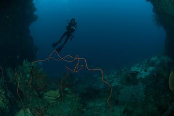 Diver, wire corals, sea fan in Ambon, Maluku underwater