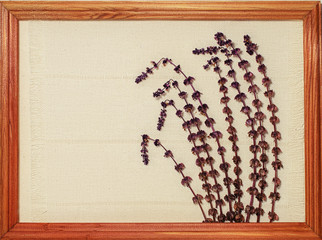 Dried flowers of light purple mint on the sheet of paper