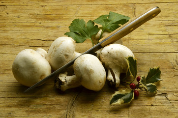 Swam Fungi Pilze Funghi Skimmel Fungus Expo Milano 2015 food
