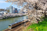 Cherry blossoms at the Sotobori Park in Tokyo