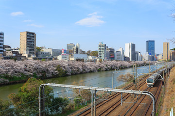 Cherry blossoms at the Sotobori Park in Tokyo