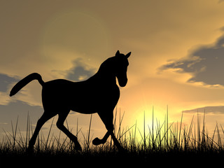 Horse silhouette in grass at sunset