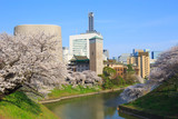 Cherry blossoms at the Kitanomaru Park in Tokyo - 74902013