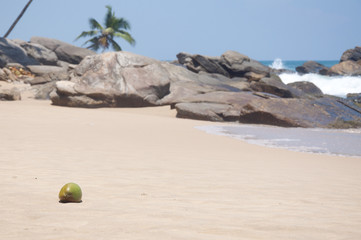 A Raw Coconut at the beach in Tangalle, Sri Lanka