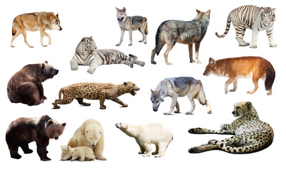 predators. Isolated over white