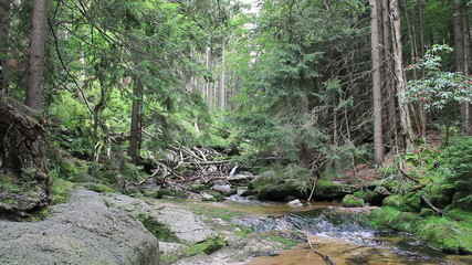 Stream of water in the wild forest. UNESCO biosphere reserve