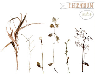Watercolor botanical illustration of dried wild herbs