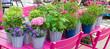 Blumentöpfe auf dem Gartentisch im Frühjahr