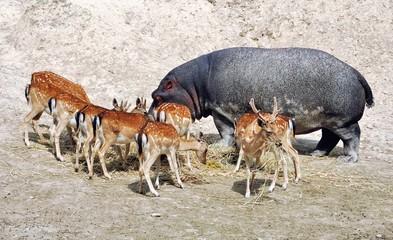 Animal community - be different