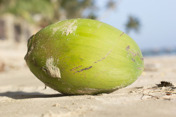 Coconut on the beaches of Vietnam