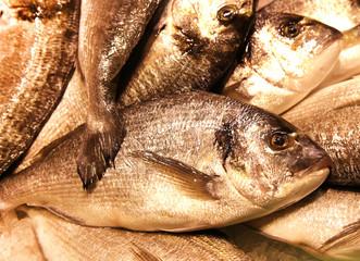 Black Seabream Spondyliosoma cantharus mediterranean sea food fr