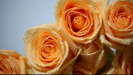 bouquet of peach-colored roses on a gray background