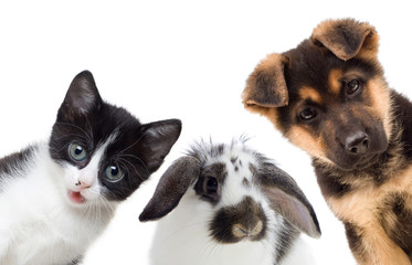 Puppy and kitten and rabbit