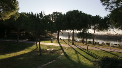 sun thru the trees