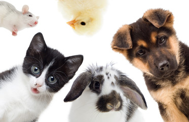 Puppy and kitten and rabbit and bird and rat