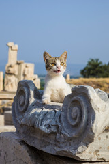 The cat lies on the ruins of Ephesus