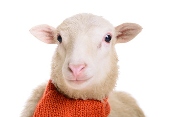 Sheep in Christmas scarf