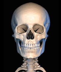 Human skull close-up, on black background, front view.
