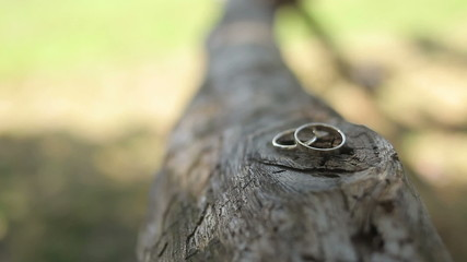 Wedding rings on a tree log