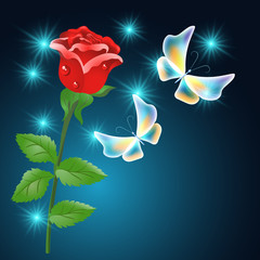 Red rose and butterflies