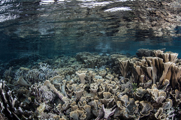 Shallow Reef and Calm Water