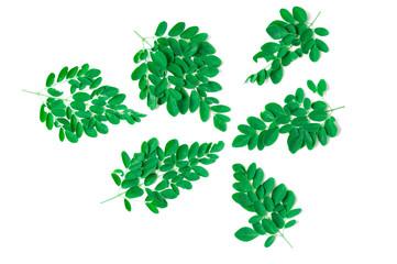Green leaf of Horse radish tree, Drumstick. (Moringa oleifera La