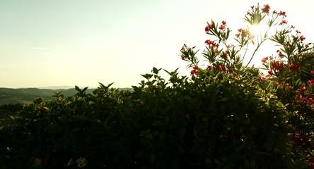 Beautiful Tuscany Landscape Nature Vineyard Summer Wine Concept