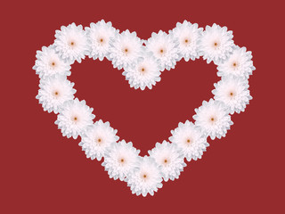 white daisy flower heart shape valentines day red background