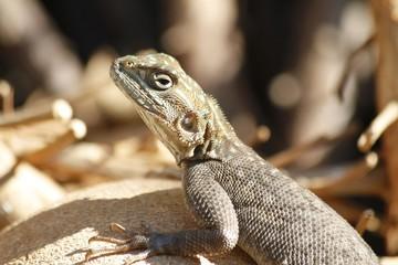 Lizard at the Fairchild Gardens