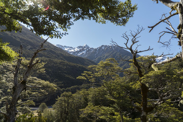 Mountains through the trees. New Zealand
