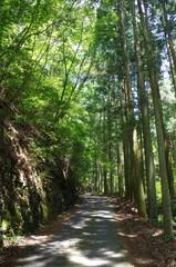 山奥の道と木漏れ日