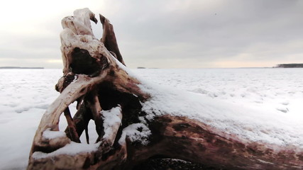 Old snag on the shore of a frozen lake