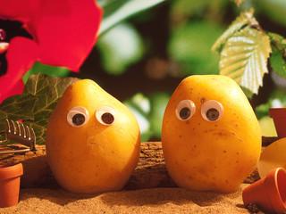 Frühling - Pflanzen - Kartoffel