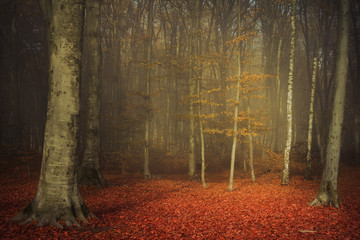 Romantic foggy forest in an autumn day