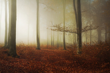Beautiful light in a foggy forest during an autumn day