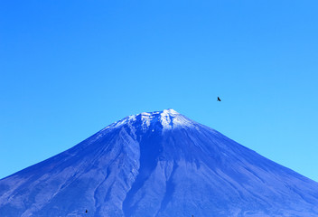 富士山と空を飛ぶ鳥