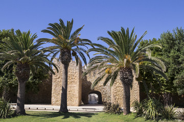 defensive wall and palm