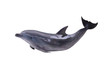 Leinwandbild Motiv dark gray isolated dolphin