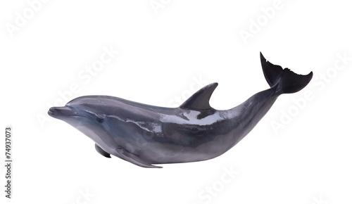 dark gray isolated dolphin - 74937073